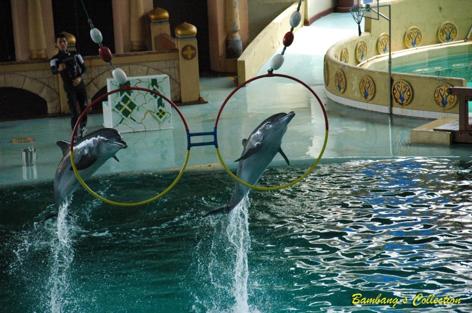 Atraksi lumba-lumba
