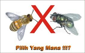 lalat&lebah